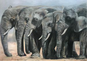 Herd by Kirsty Owen