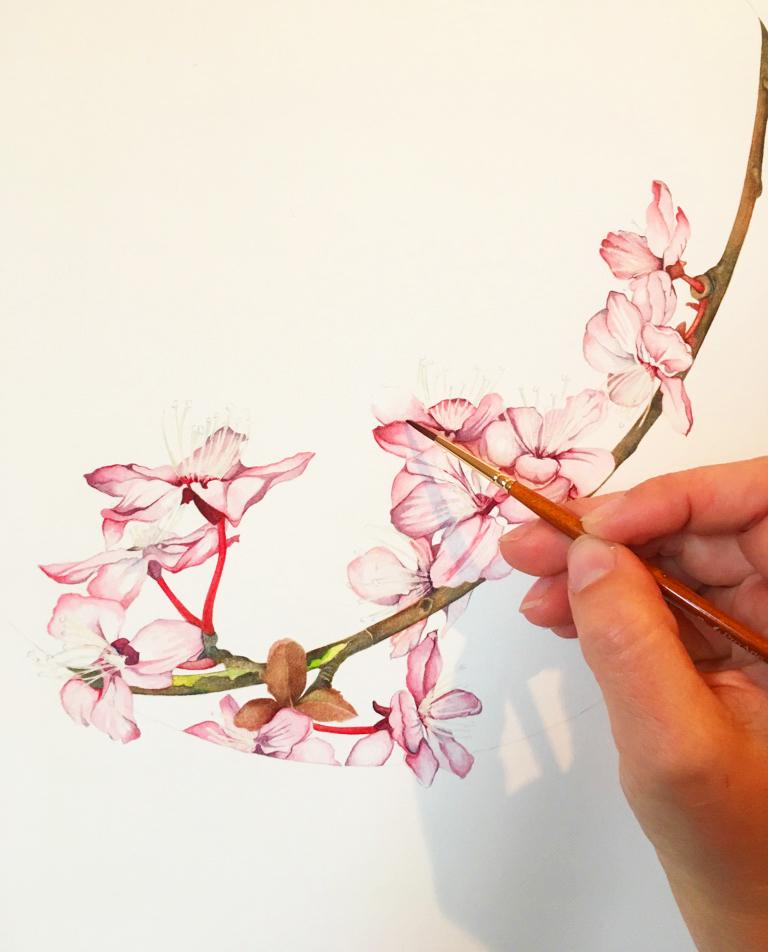 Spring Flowers by botanical artist Karen Green at Pegasus Art