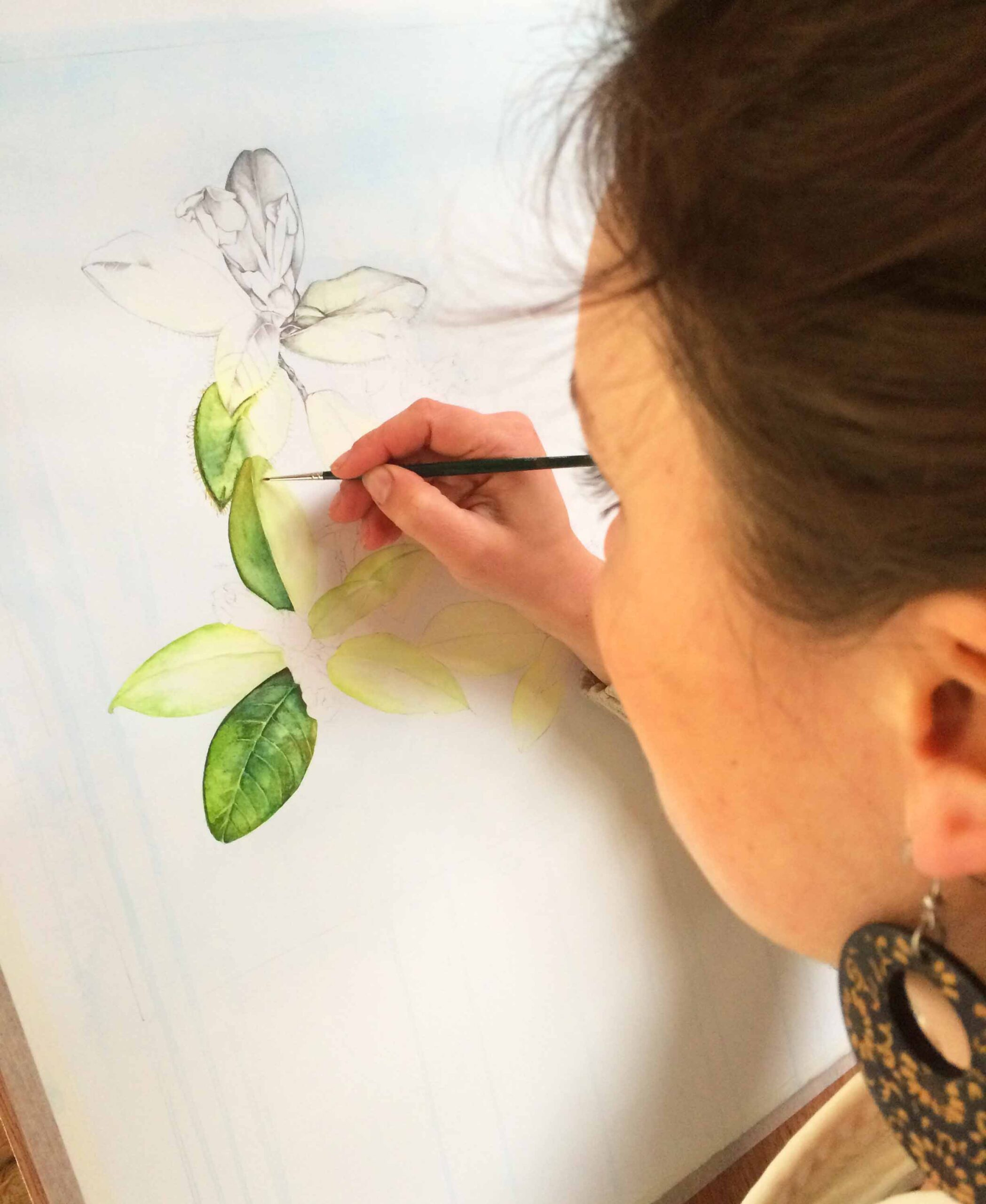 How to paint a botanical orchid