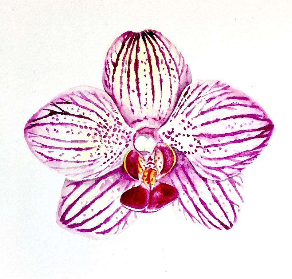 Botanical orchid painting with Karen Green Art at Pegasus Art