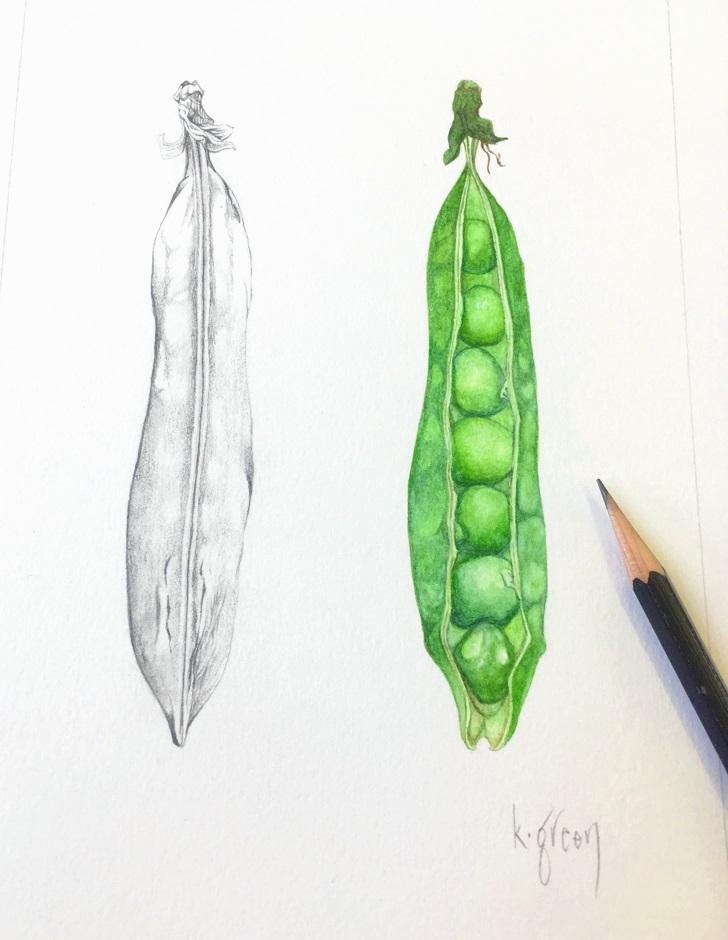 Peas by Karen Green Art Botanical painting at Pegasus Art