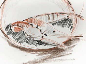Alison Vickery charcoal prawns drawing