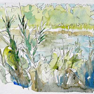 Max Hale pen and ink wash of nature reserve