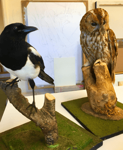 Paul Fowler drawing workshop taxidermy owl and magpie on branches